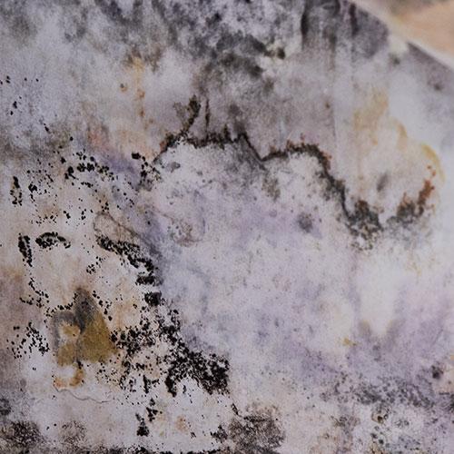 mold testing in san antonio tx